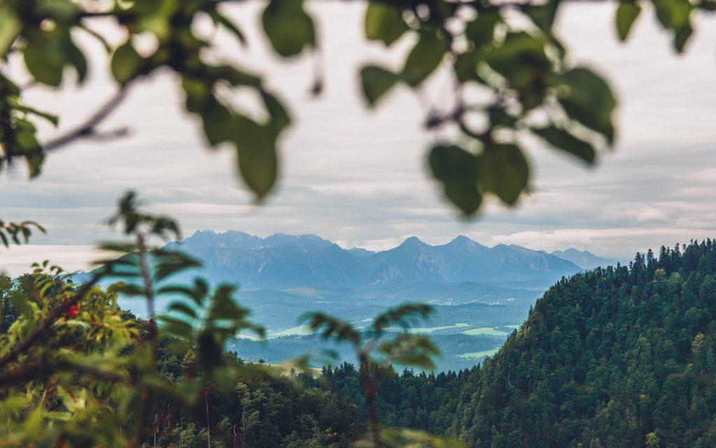 Widok z Sokolicy na Tatry