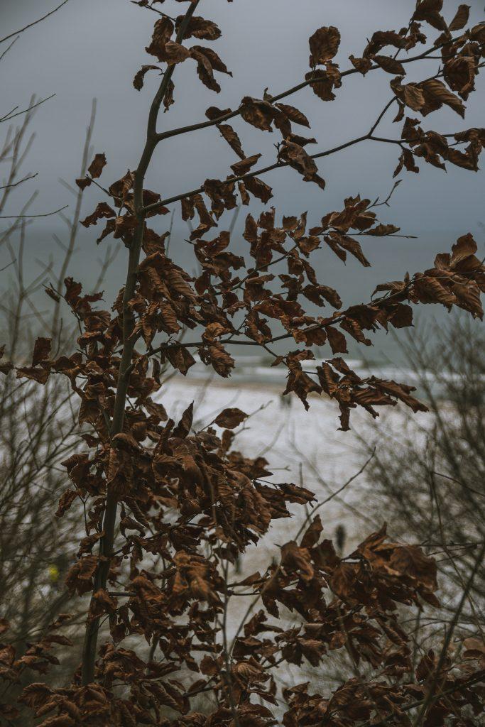 jastrzębie góra zimą władysławowo polskie morze