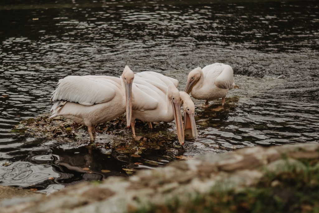 Flamingi w Wejherowie