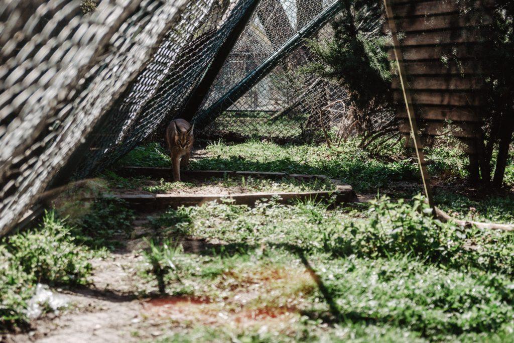 Ogród-zoobotaniczny-w-Toruniu