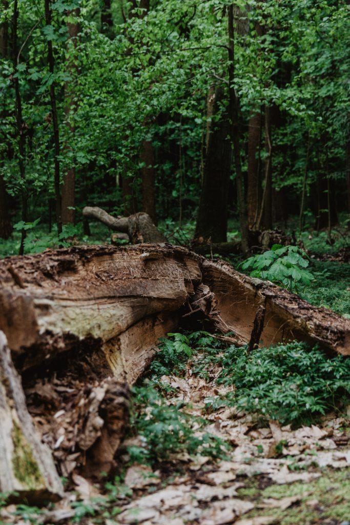 Arboretum w Witrach